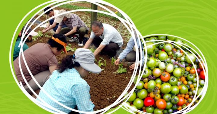 有機耕種體驗旅遊專業證書 | 香港生態旅遊專業培訓中心 | ettc.hk