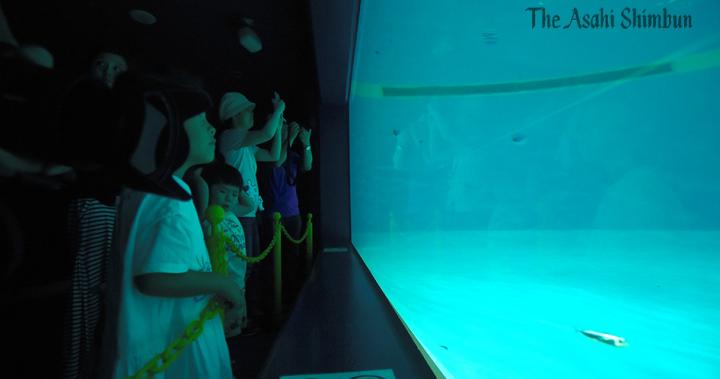 黑鮪魚稚魚3000隻→10隻 水族館開放參觀前大量死亡:朝日新聞中文網