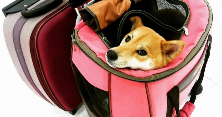 要求台鐵設立【寵物友善車廂】公共政策提案聯署